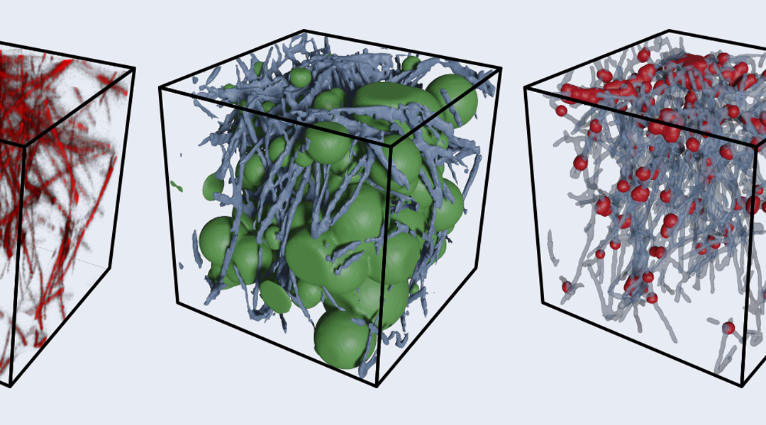 Confocal 3D image of collagen, pore size and network structure